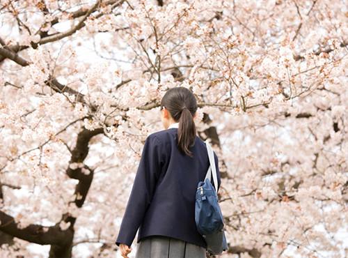 桜を見上げる学生